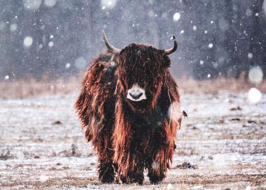 yarn-yak-wool
